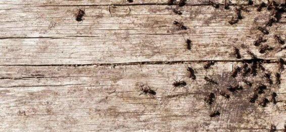 evitar insectes